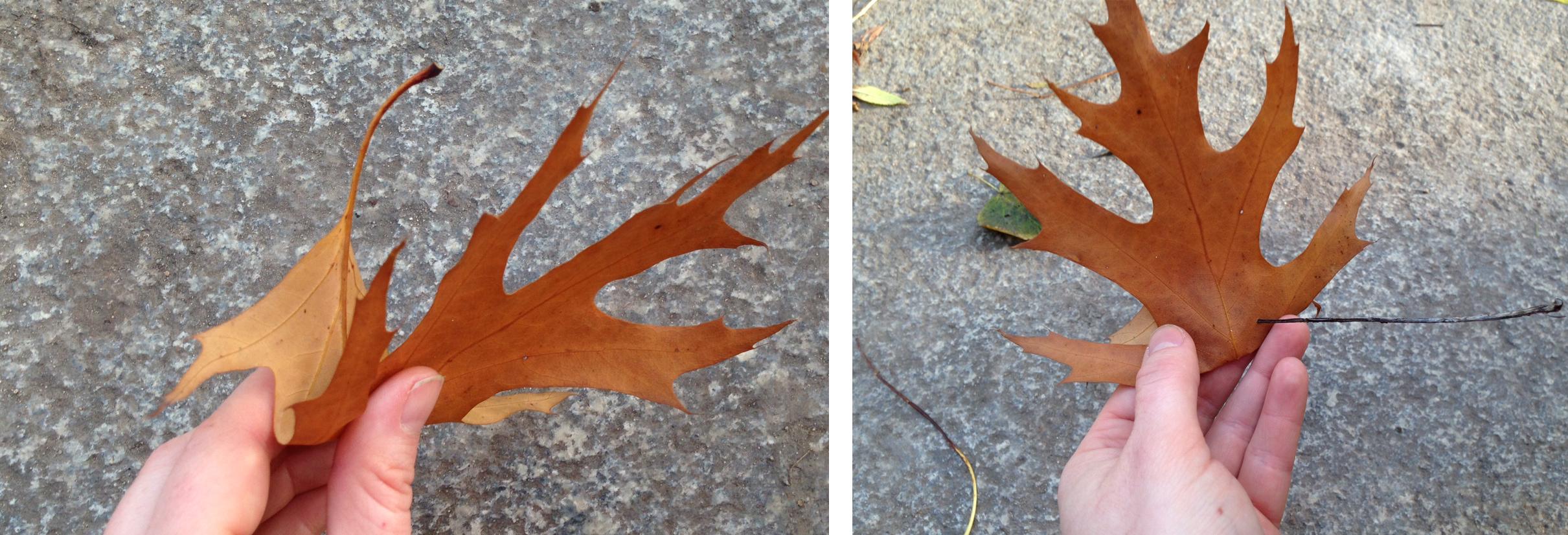 Basteln im Herbst: Wir basteln eine Blätterkrone | Julica-Design
